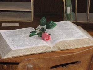 Pink rose bud on book.