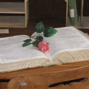 Pink rose bud on book.
