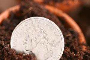 quarter in garden soil