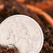 quarter in garden soil