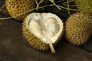 Using Durian