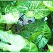 white kitten peering out from behind plant leaves