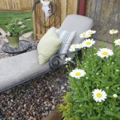Gardening Trends for 2007