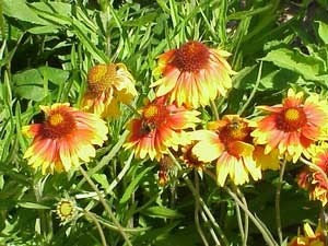 yellow and reddish orange flowers