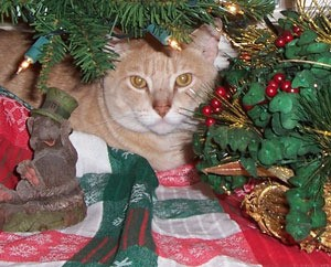 Cat under Christmas tree.