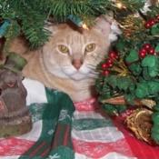 Cat under Christmas tree.