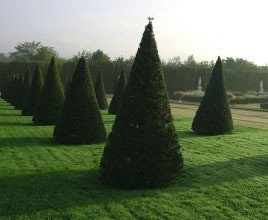 Fast Growing Evergreen Trees