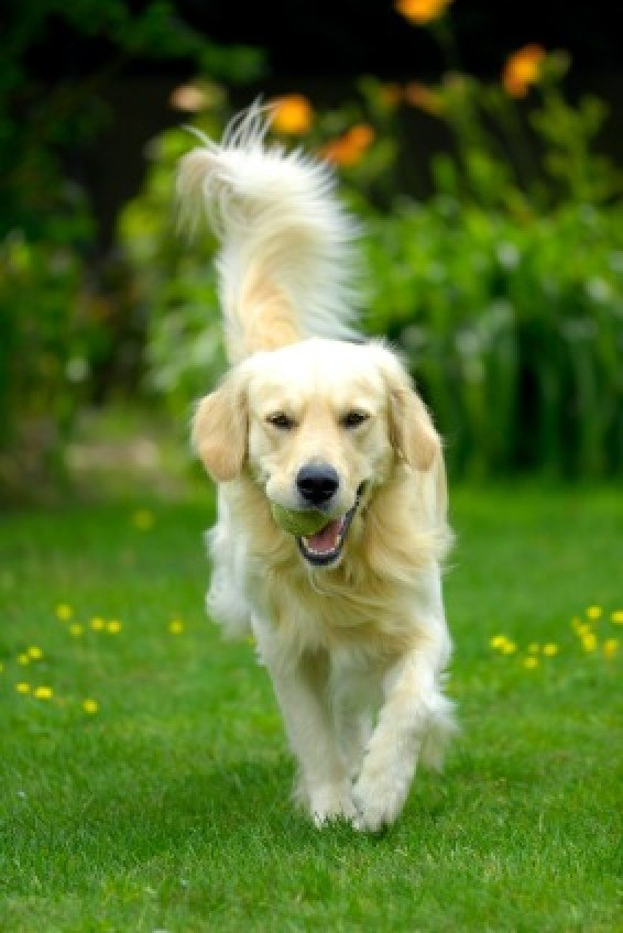 Keeping Your Dog In Your Yard Thriftyfun