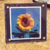 framed sunflower photo