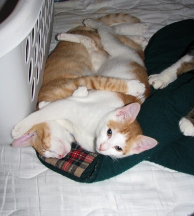 kittens lying together