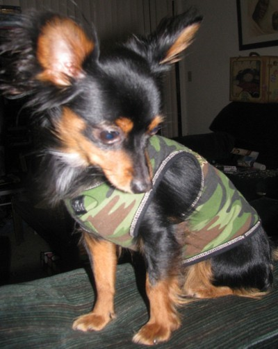 Tazz in camo jacket.
