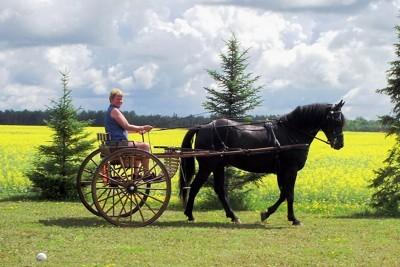 pulling a cart