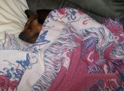 Uner a blanket.