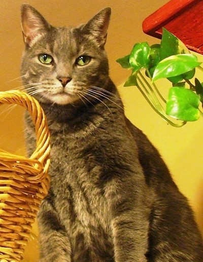 Poole the cat with Basket