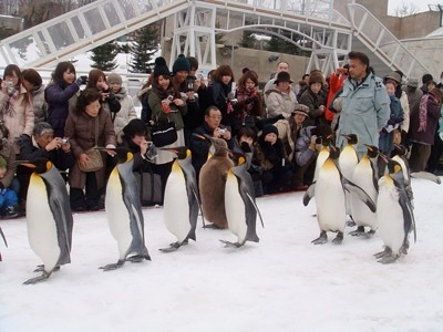 A row of marching penguins in Hokkaido, Japan.