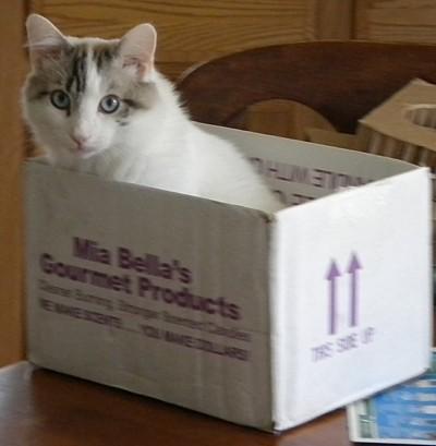 KeKe in a box.