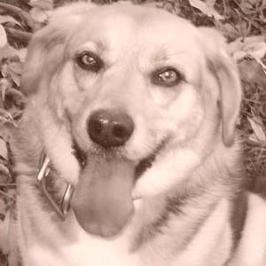 Sepia photo of Sassy.