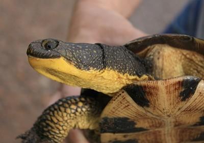 Closeup of turtle's head.