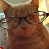Tigger in reading glasses.