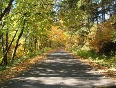 deciduous forest road
