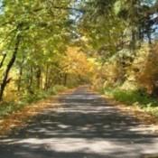 deciduous forest road