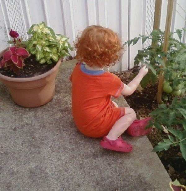 A small boy looking at tomatoes growing outside.