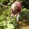 Garden: Summer Bounty