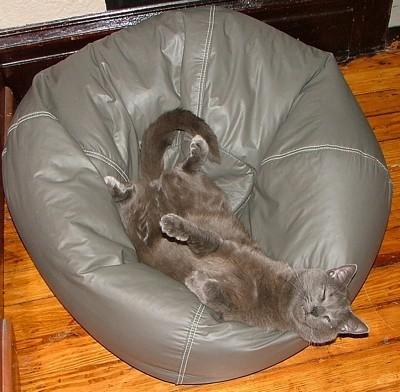Lying upside down on a bean bag chair.