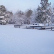 Snowy Fence (South Carolina)