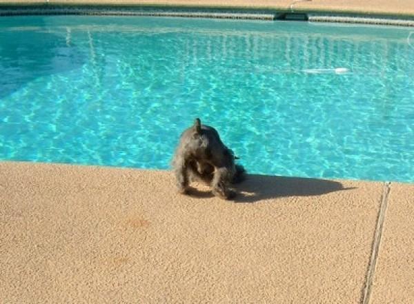 head down towards pool