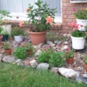 Display Rock Collection In Garden