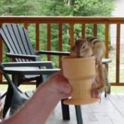 Sassy (Chipmunk)