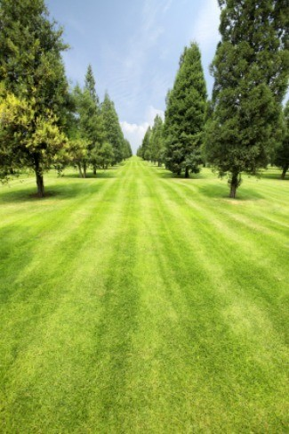 how to grow evergreen trees