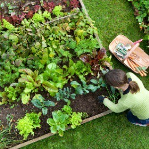 Celebrate National Garden Month in April