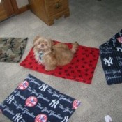several blankets one with a dog sitting on it