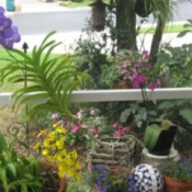 A collection of plants on a patio or deck.