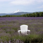 mountain and lavender