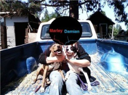 Marley and Damian (Pitbull Terriers)