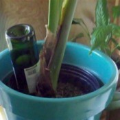 Upside down wine bottle in flower pot.