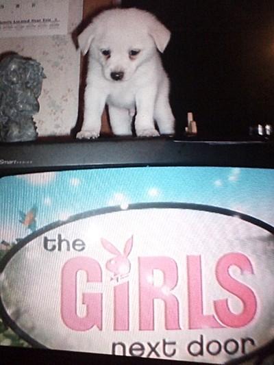 White puppy.