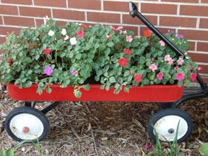 Impatiens in red wagon.