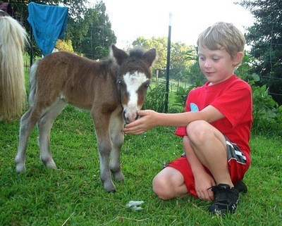 Boy and very young horse.