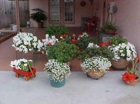 A carport filled with flowers.