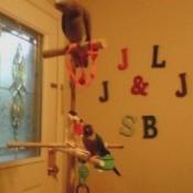 Homemade Bird Toys