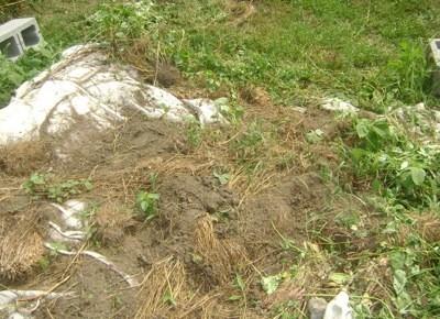 collecting dirt for your garden - Garden Dirt