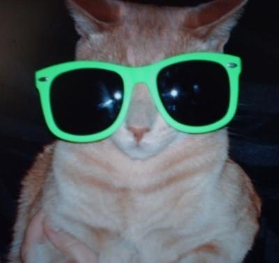 Tigger in shades.