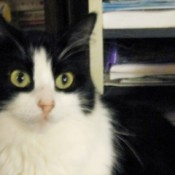 Missy Stitch (Cat)