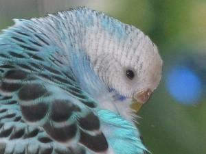 Closeup of Violet.