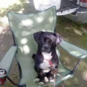Dixie (Basset Hound/Terrier)