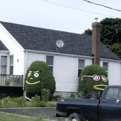 Hedge People